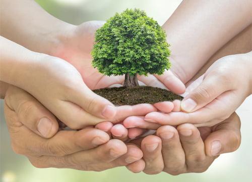 due mani si prendono cura di un albero